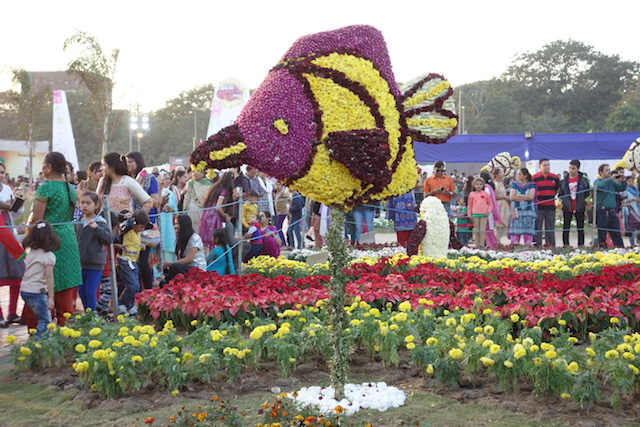 Ahmedabad Flower Show 2015
